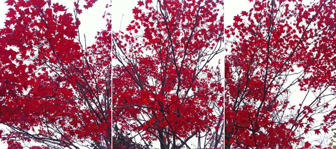Rot-Weiss-Schwarz